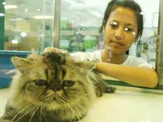 Lowongan Kerja Batam (Pet House)