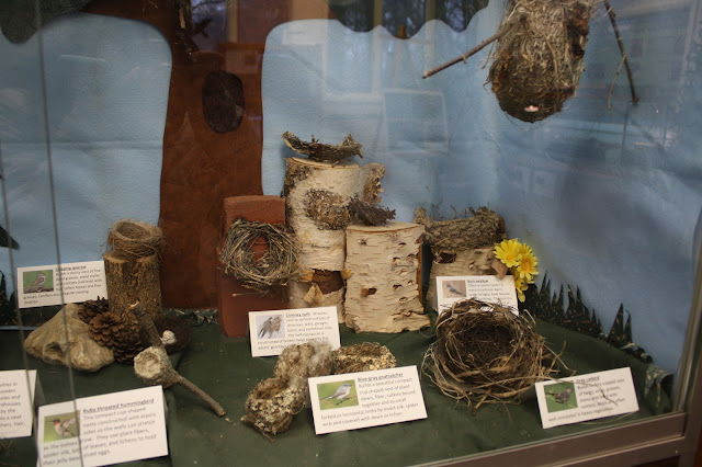 Examples of nests at Willowbrook Nature Center.