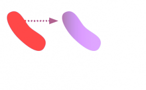Antibiotic resistance in Bacteria