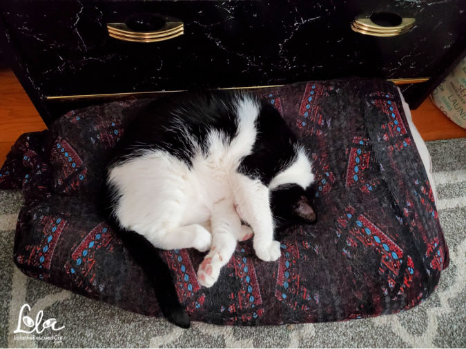 Black and White Cat Sleeping on a MYLAP Pet Bed