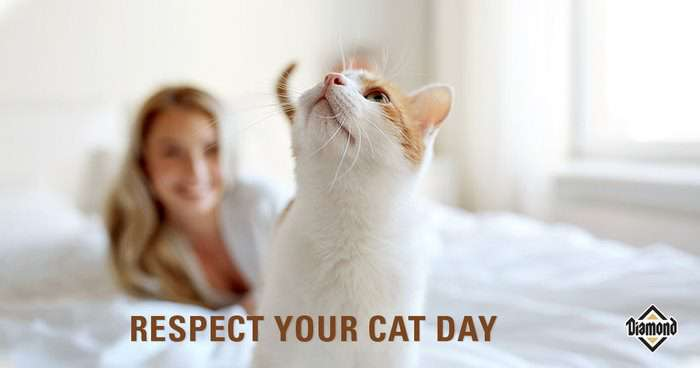 Respect Your Cat Day Wishes for Instagram