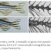 Mutação em peixe pode explicar crucial transição evolutiva da coluna vertebral