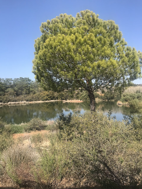 Quinta do Marim, Olhão