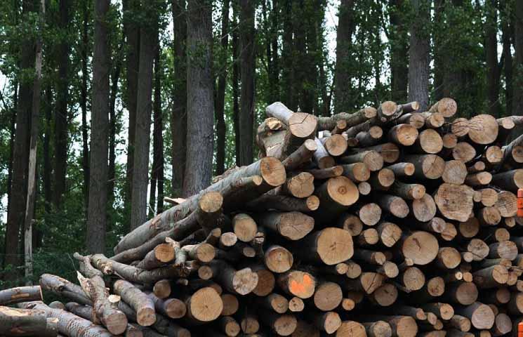 Pengertian Biomassa dan Cara Menghitung