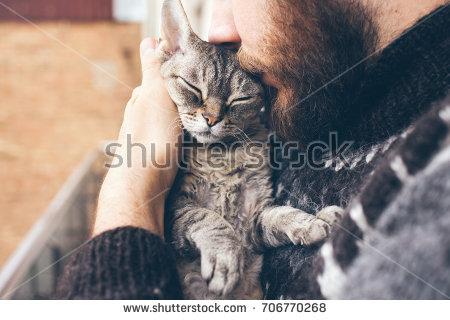 Tahu Ngak Inilah Ciri Ciri Kucing Kalau Dia Dalam Masa Mau Kawin