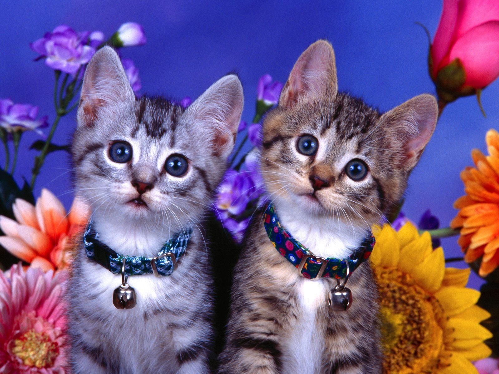 Puter Screen Saver PC Desktop Wallpaper Cat With Flowers