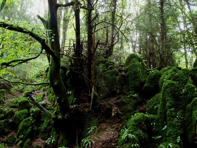 Dean Forest