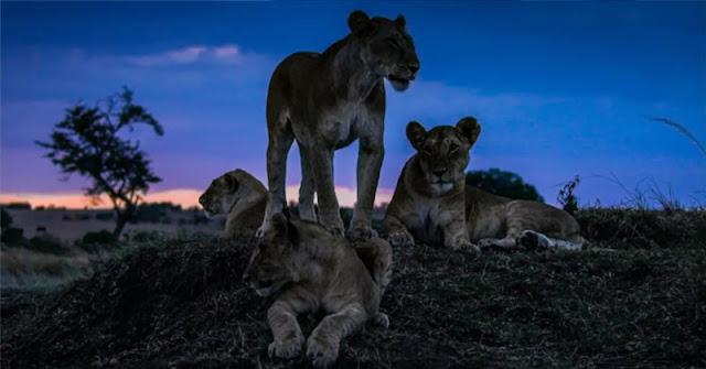 Opinión sobre 'La Tierra de Noche' el documental de naturaleza de Netflix