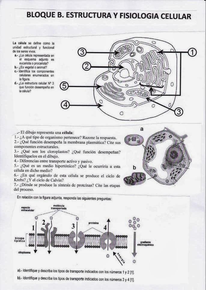 biologia2bachcamp: EXÁMENES DE SELECTIVIDAD