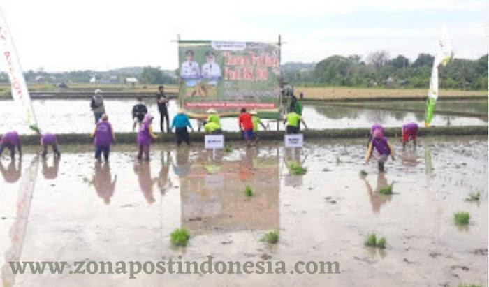 Bupati Situbondo Drs. H. Karna Suswandi, MM. Bersama Kelompok Tani Suka Maju, Lakukan Penanaman Padi BK 900