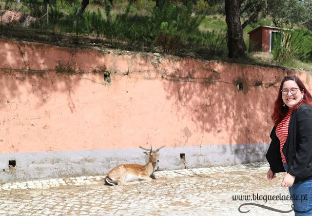 Tapada Nacional de Mafra + floresta portuguesa + gamas + javali + passeio + blogue português de casal + blogue ela e ele + ele e ela + pedro e telma
