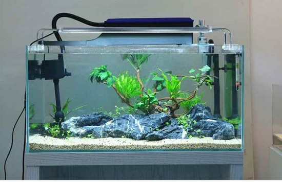 Importance of filter in aquarium