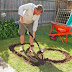Dad Digs Out A Funny Shape In The Backyard. What It Becomes? BRILLIANT!