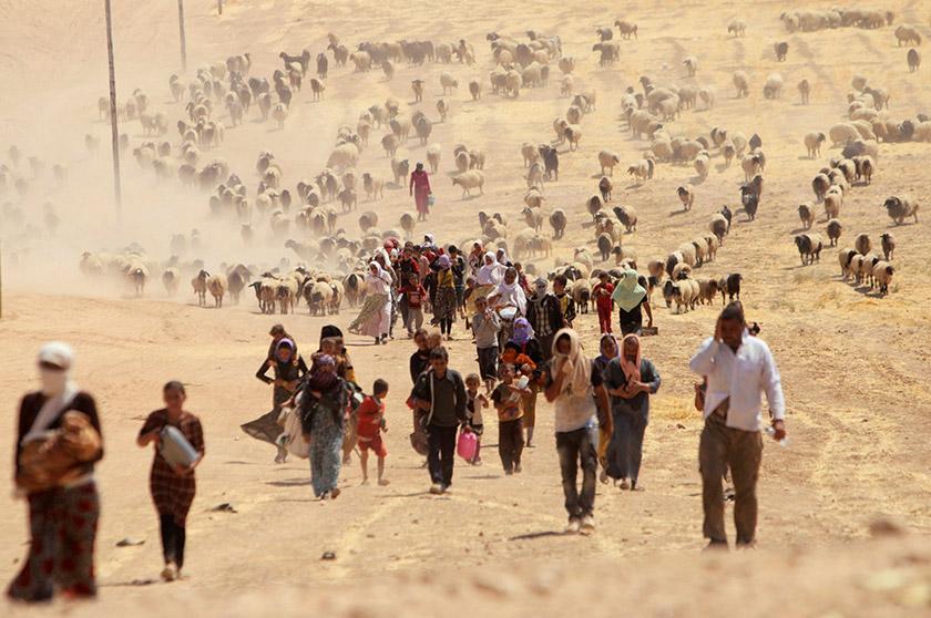 Біженці-єзиди йдуть у напрямку сирійського кордону у гори Синджар (10.08.2014)