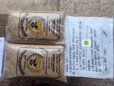Benih Padi yang dibeli   LUKMAN EFENDI Madiun, Jatim.    (Sebelum packing karung).
