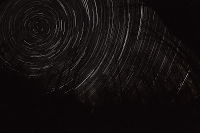 star trails behind trees of forest large