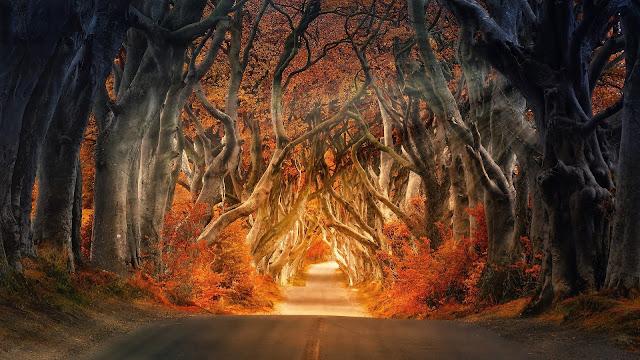 La stagione dell'anima: benvenuto autunno