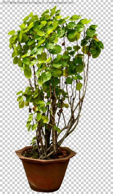PNG Garden Plant Texture 00005