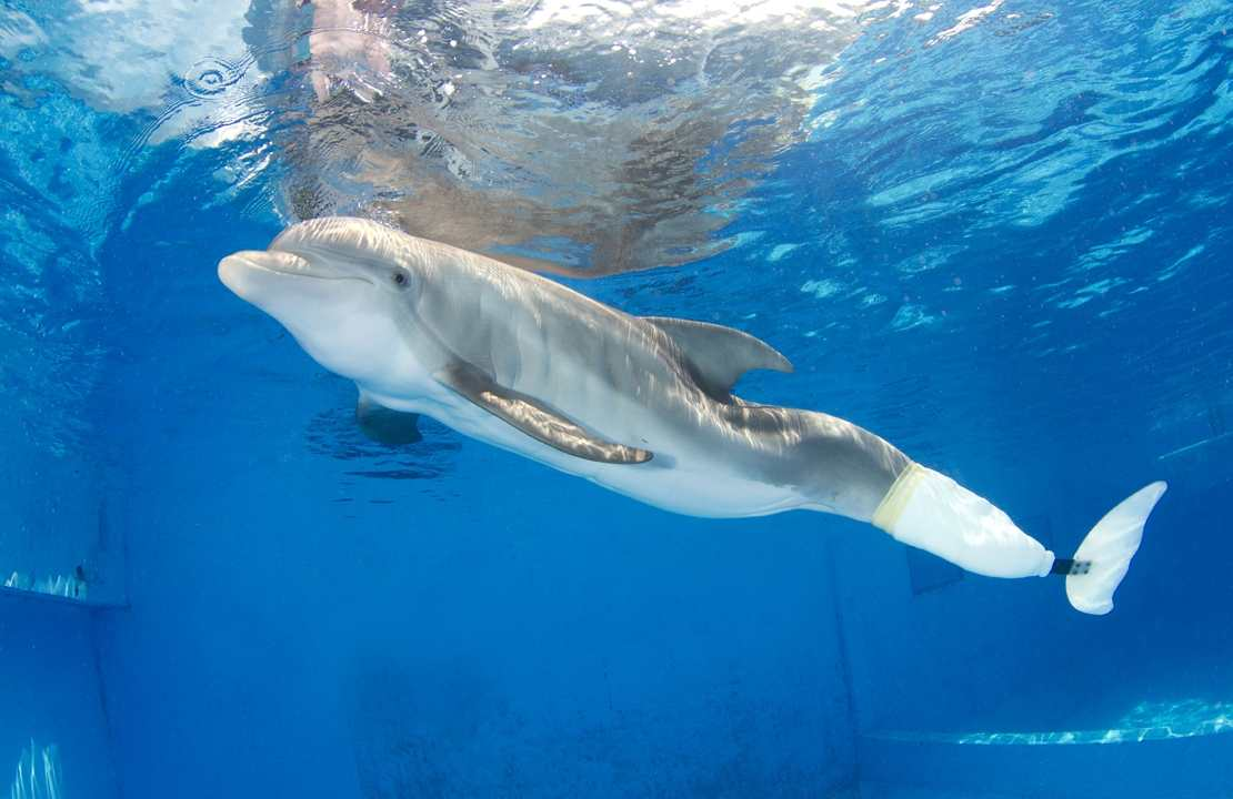 meet winter the dolphin