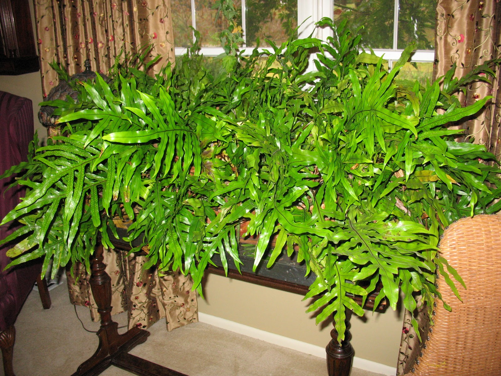 In House Plant Greenbow Bringing In House Plants Etc
