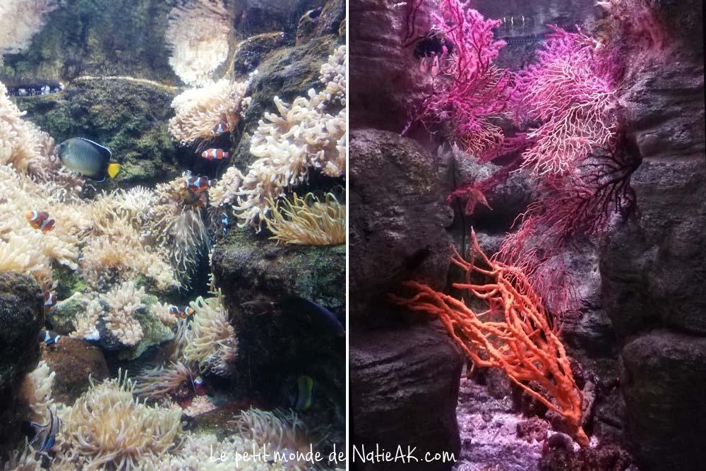 aquarium de Paris horaire