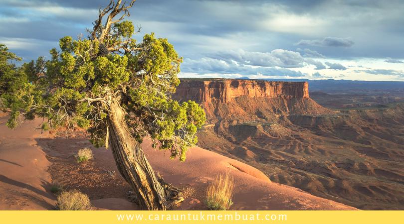 Juniper Tree on Canyonlands 14