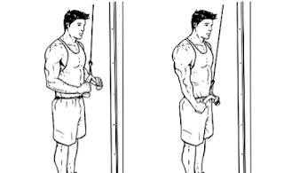 program latihan beban untuk orang kurus