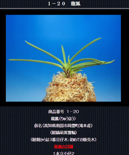 http://www.fuuran.jp/1-20html