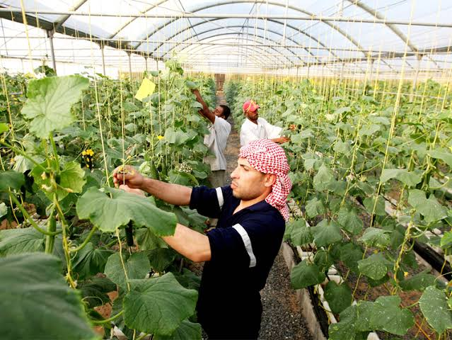 keuntungan petani hidroponik