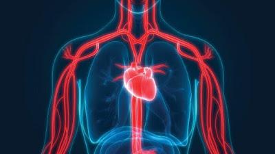 أسباب هبوط الدورة الدموية