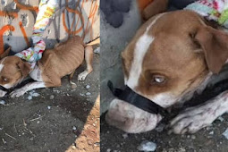 Justice for honey: Found with her mouth taped shut and she is starved and bloody