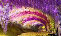 Morsalkım çiçeklerinden oluşmuş rengarenk çiçek tüneli