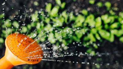 berkebun, menyiram tanaman,
