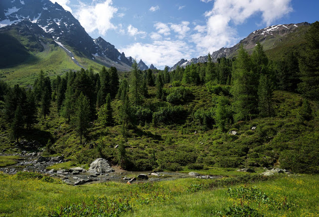 Study reveals that climate change could dramatically alter fragile mountain habitats