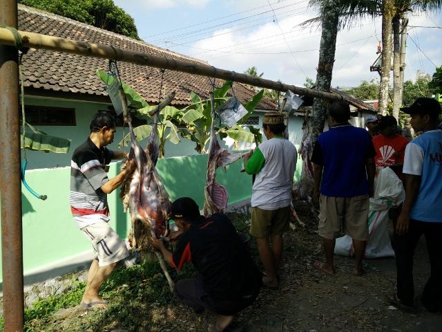 penyembelihan hewan kurban di jetis caturharjo sleman