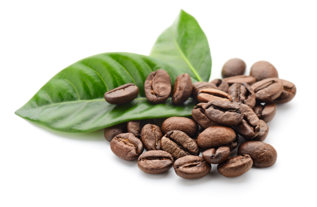 The Benefits of Coffee Leaves