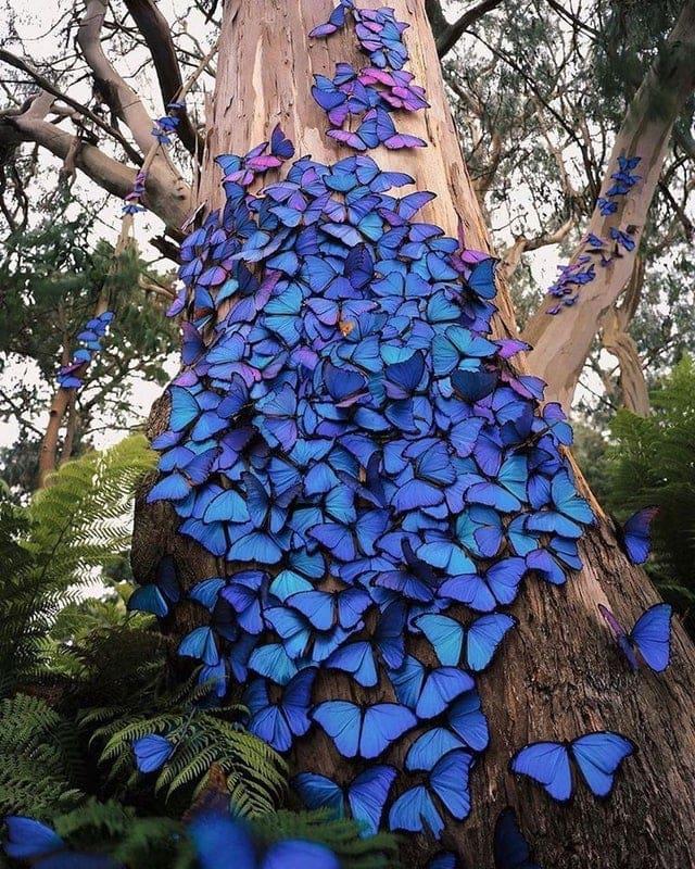 Blue butterflies adorn a tree