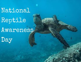 National Reptile Awareness Day Wishes Beautiful Image