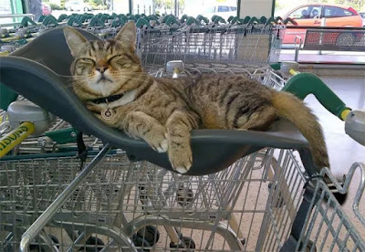 Every day, Brutus the cat would walk the two hundred meters from his home, right down to his native food market in Flintshire, Wales. Here he would charm customers along with his light manner whereas sorting out the newest arrivals at the meat and fish section or notice himself a comfy corner to quiet down in and keep a watch on proceedings.  Brutus became such a fixture at Morrisons, better-known and dear by customers and employees alike and even attracting over twelve,000 followers on his personal Facebook page, that once he sadly passed on to the great beyond earlier this year the community determined to honor his memory.  Shoppers raised thousands of greenbacks in donations to create an eighteen in. bronze sculpture of Brutus, a permanent reminder of the popular pussycat and a fitting tribute to the friendliest of