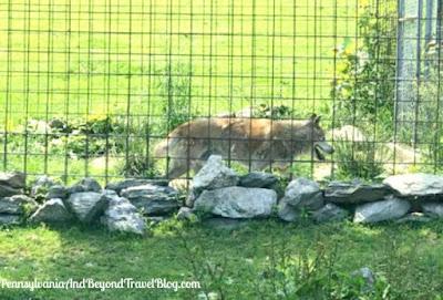 East Coast Exotic Animal Rescue in Fairfield Pennsylvania