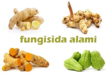Fungisida Alami Buatan Sendiri