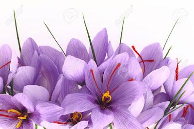 Wonderful Saffron Flower 4k HD Photos and Images