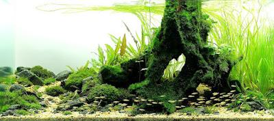 Desain Aquascape Nature