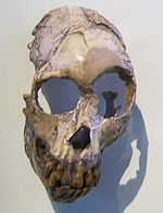 Proconsul primate, This is Believed to be Universally accepted to be intermediate between 'ape-like monkeys' such as Aegyptopithecus  and later apes including hominids. Hadrianic Proconsuls of Africa  much of the time-bound about them - should be natural candidates for writing historical hoaxes.