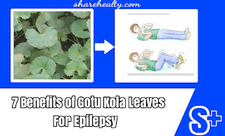 7 Benefits of Gotu Kola Leaves for Epilepsy