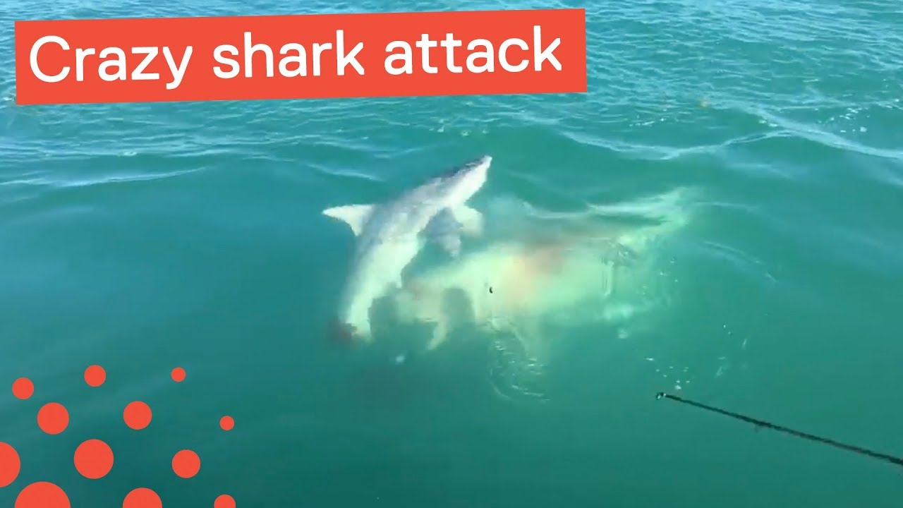 18 Ways To Survive A Shark Attack: Shark Week