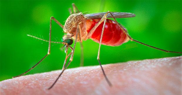 cara mengusir nyamuk secara efektif