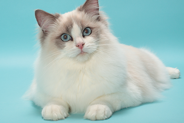Follow the different types and breeds of cats around the world | cat and dogs