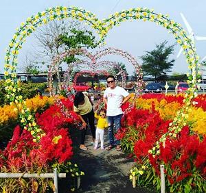 Taman Bunga Matahari Jogja