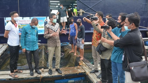 Gubernur Irwan Prayitno Panen Ikan Kerapu Siap Ekspor